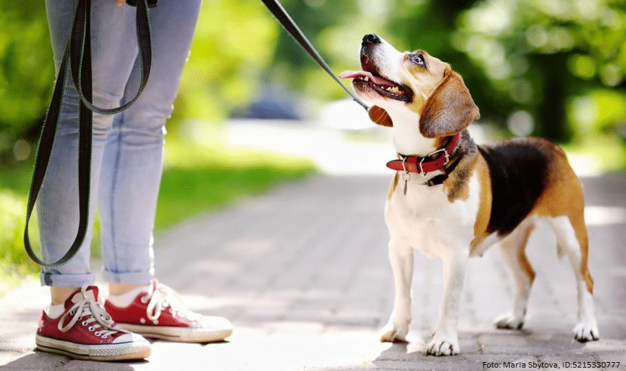 Leinenpflicht - Hund an der Leine