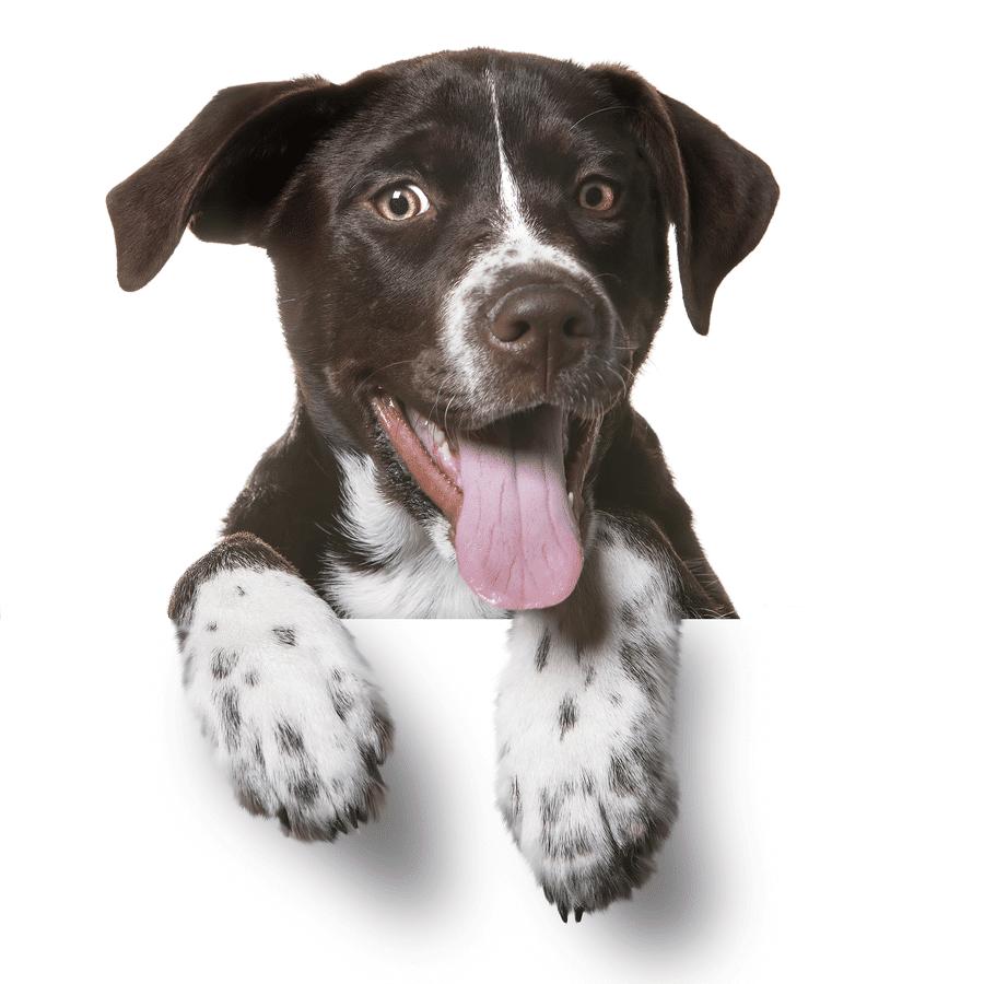 Labrador-Mix - wir sammeln Futterspenden für Tiere wie mich!