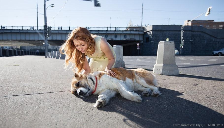 hitzschlag-beim-hund-hund-liegt-auf-dem-asphalt