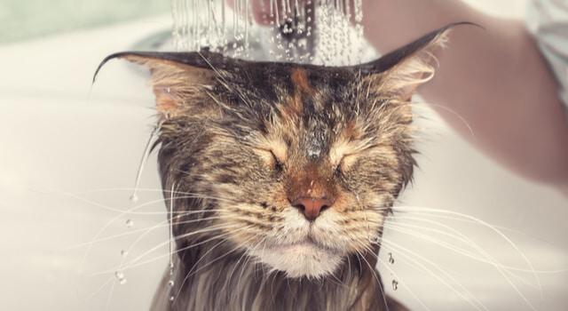Katze unter der Dusche